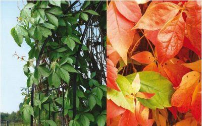 Rosenbogen Modern rosenbogen modern garten gaumen und mehr